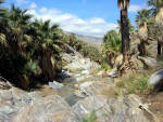 Palm Springs - Indian Canyons
