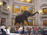 Washington DC - Smithsonian Museum of Natural History